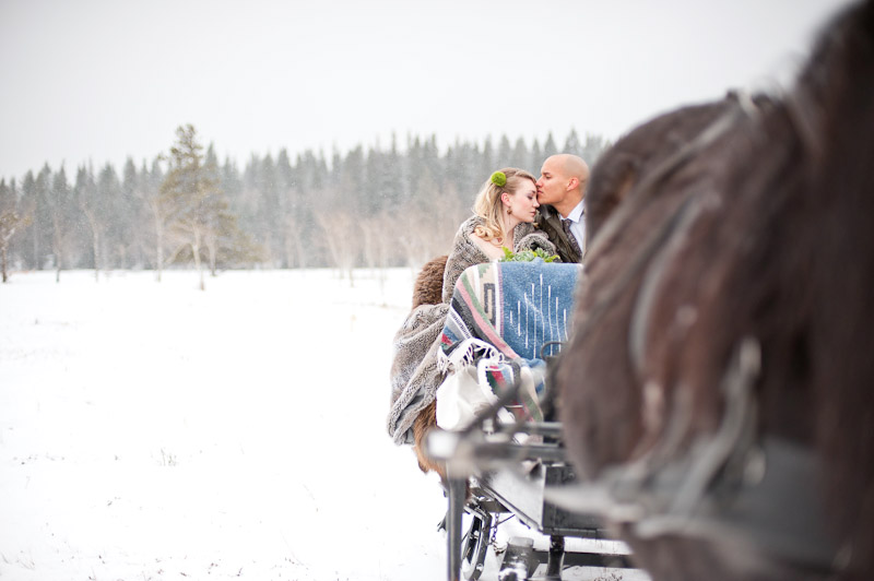 horse-sleigh-winter-wedding-canmore-kananaskis